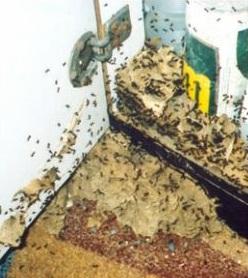 Eliminare le formiche disinfestazione ma anche no il - Eliminare formiche in casa ...