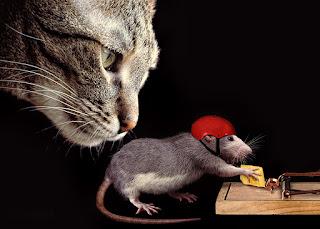 En Güzel Hayvan Resimleri, ile ilgili aramalar ilginç hayvan resmi hayvan resmi komik yazılı hayvan resmi komik hayvan resmi indir hayvan görselleri ödüllü hayvan fotoğrafları hayvan resimleri toplu küçük hayvan resmi