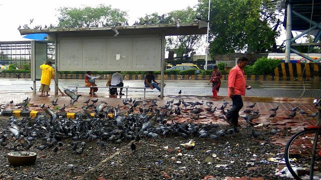pigeons, birds, bus stop, kala nagar, bandra east, mumbai, incredible india,