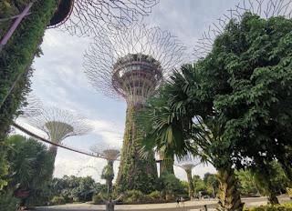 Gardens by the Bay o Jardines de la Bahía. Supertrees o Superárboles. Singapur o Singapore.