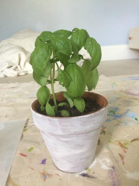 1st coat of planter
