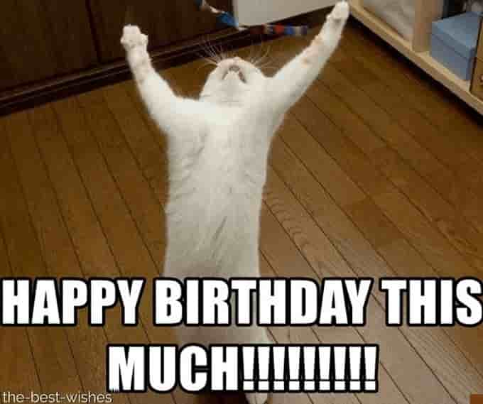 cute birthday meme with cat