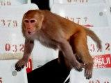 ipl monkey