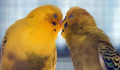 10 Hewan Paling Romantis di Dunia