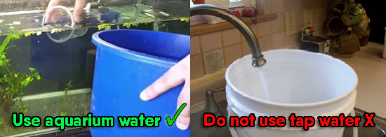 Tips for cleaning a double sponge filter