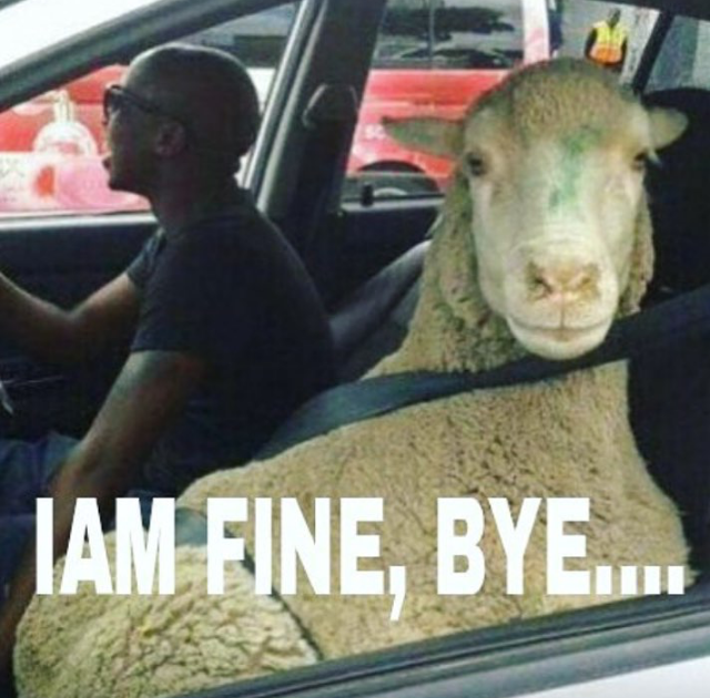 20 Meme 'Pesan Terakhir Kambing & Sapi' Ini Ceriakan Idul