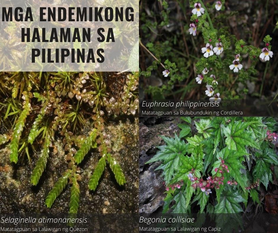 Mga Endemikong Halaman sa Pilipinas