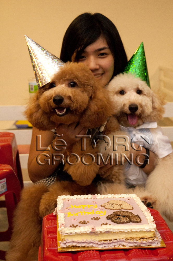 Squido の ペット不思議の国 Poodle S Birthday Party Celebration At