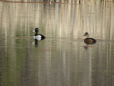 Battle Creek Wildlife Area Anderson California birding birdwatching