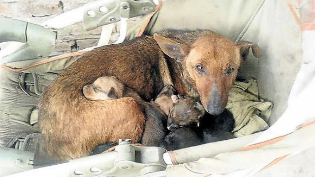 В Аргентине собака-героиня нашла брошенную в поле новорожденную девочку, принесла её к своими щенками и грела всю ночь
