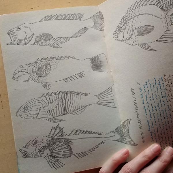 Fish drawings in my sketchbook