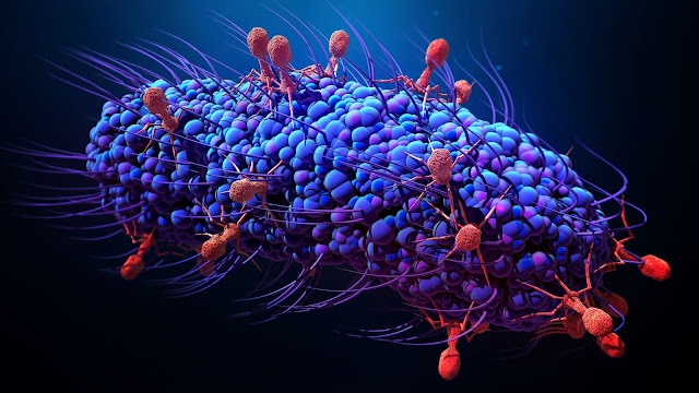 Bacteria are not only carriers of disease, they are also good friends of humans!