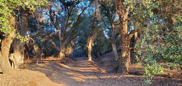 Native oak forest in Wildwood Canyon State Park