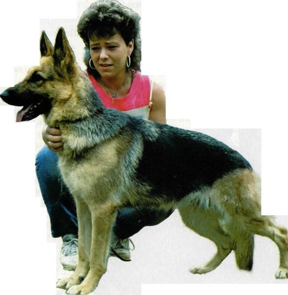 Pembiakan Anjing Ras Di Indonesia