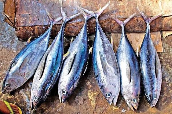 Inilah Jual Ikan Tuna di Jogjakarta Murah