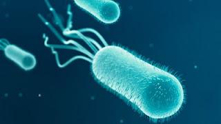 Mengerikan, 4 Bakteri Berbahaya ini Ternyata ada Pada Ponsel