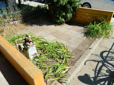 Little Portugal summer garden cleanup after by Paul Jung Gardening Services Toronto
