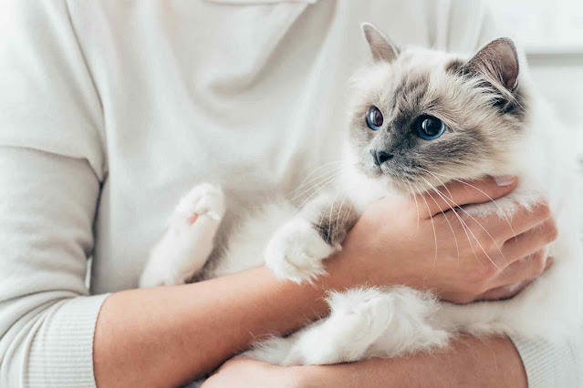Who Needs to Know About Your Cat Adoption?