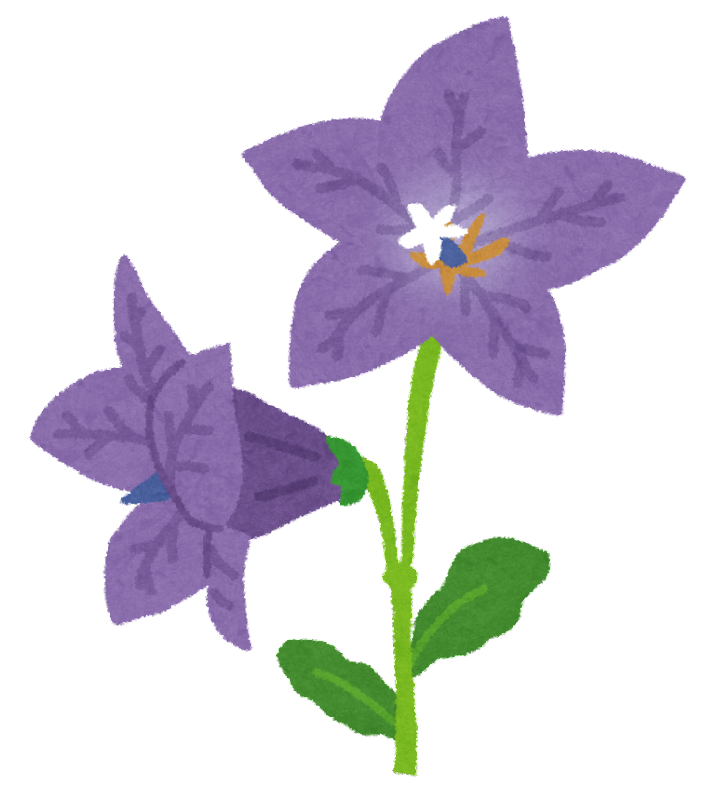 キキョウのイラスト花 かわいいフリー素材集 いらすとや