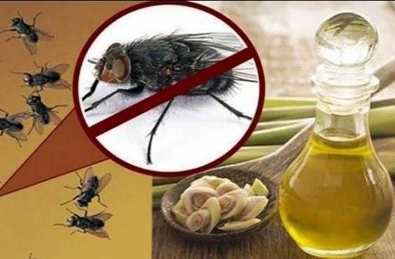 Cara Mengatasi Lalat di Rumah