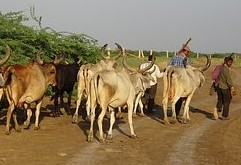 Herdsmen Gaining More Ground