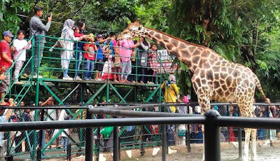 10 Objek Wisata Terbaik Di Surabaya yang Wajib Kalian Kunjungi