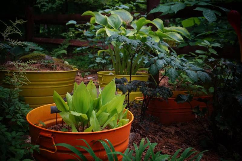 cubos de metal pintados de colores y plantas