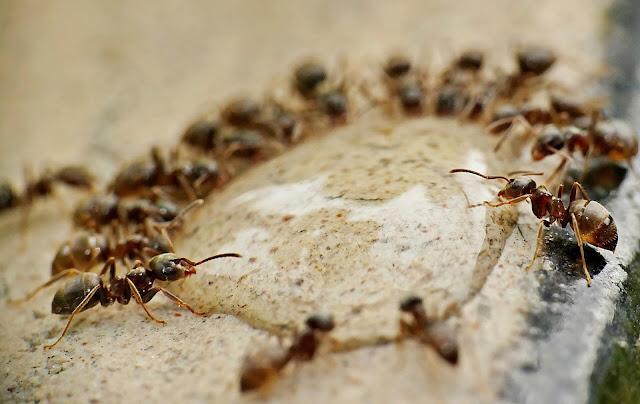 मुंग्यांबद्दल या गोष्टी वाचून डोक्यात मुंग्या येतील || interesting facts