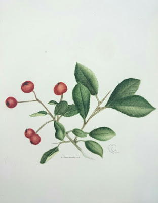 painting of red berries botanical traditional