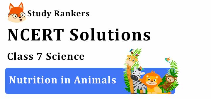 NCERT Solutions for Class 7 Science Chapter 2 Nutrition in Animals