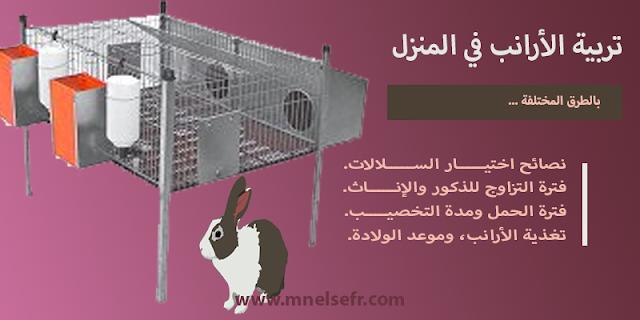 تربية الأرانب في المنزل بالطرق المختلفة