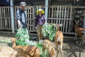 Hỏi cách chữa trị hươu sao lông xù lên, gầy và kém ăn?