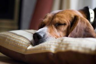 Faça uma caminha de cachorro para seu pet dormir quentinho!