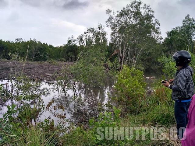 Ratusan Hektar Mangrove Dibabat, Kayunya Dijadikan Arang