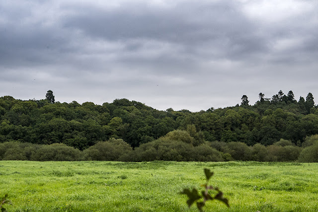 Wooded Hills