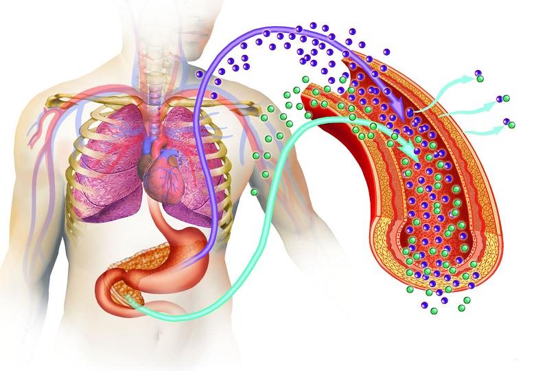 Tudo Que você Precisa Saber Sobre os Efeitos da Insulina no Corpo