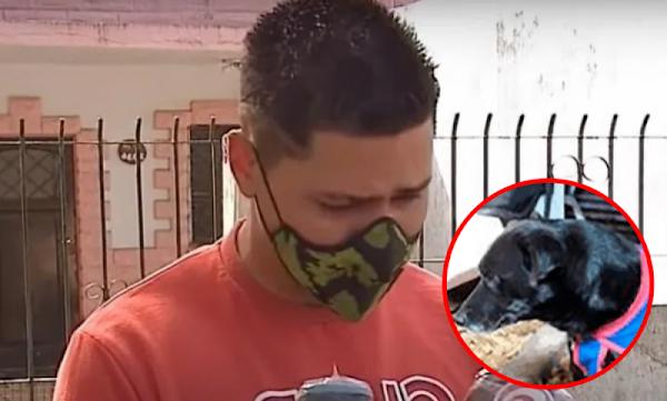 Sujeto que MAT0 a su perro por morder a a su pequeño hijo podría pasar solo 1 añito en PRISIÓN