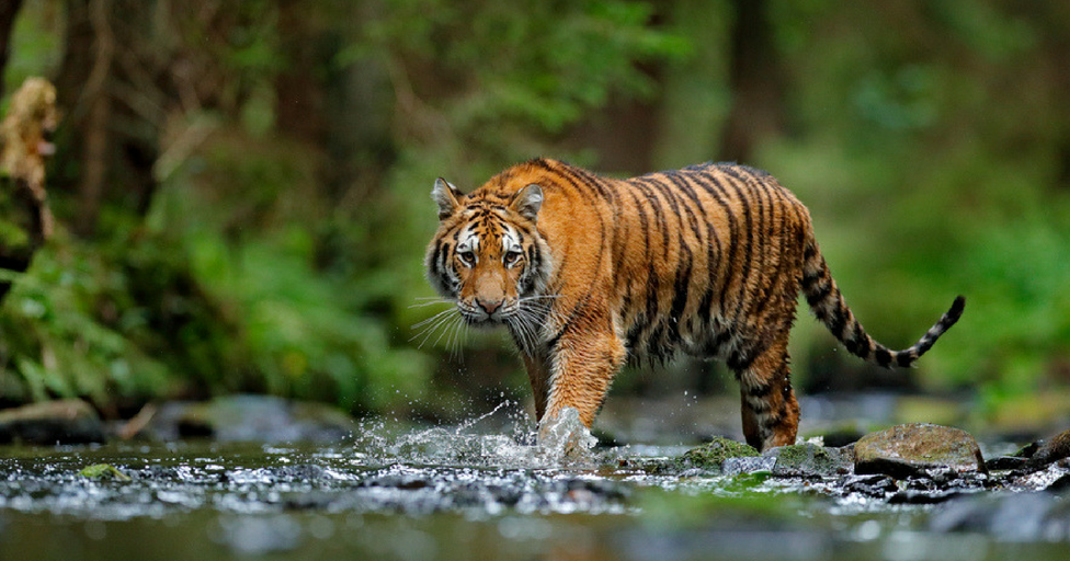 10 Highly-Rated Wildlife Conservation Charities