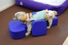 reabilitação de cães com fraturas