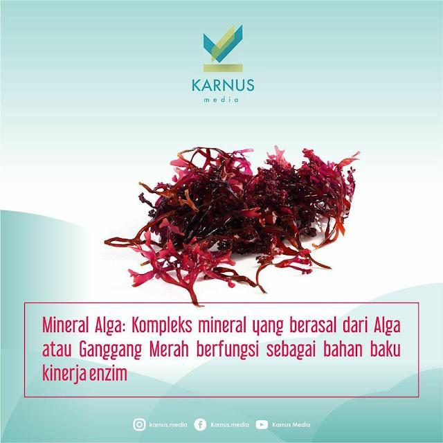 Alga Kirei Minuman collagen Halal di Indonesia