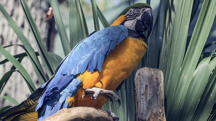 parrot wasting disease