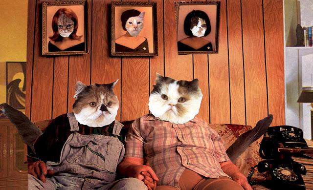 Catpeople under quarantine collage