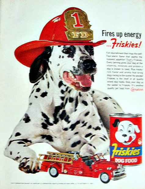 Dalmatian Names Inspired By Fire Fighters