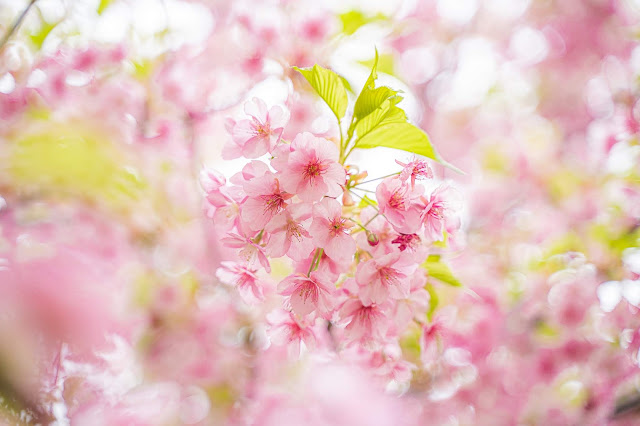 桜,日の丸.構図
