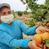 MIDAGRI: Perú logra acceso de cítricos y arándanos a la India