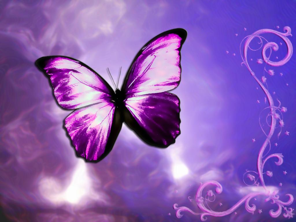 Butterfly design wallpaper ~ Funny Wallpaper
