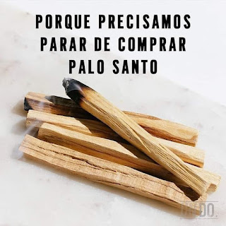 El Palo Santo está actualmente en peligro de extinción
