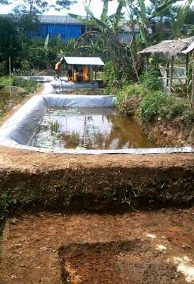Prospek Budidaya Ikan kolam tanah