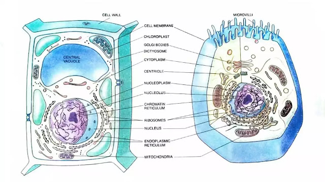 what is cell theory