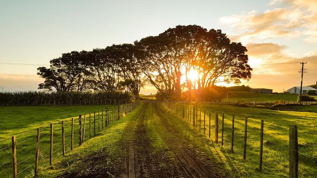 Country Road   Werner Sevenster via Unsplash